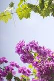 紫色花和酒lef 免版税图库摄影