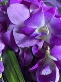 紫色花和pandan叶子 免版税库存照片