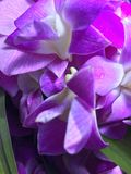 紫色花和pandan叶子 库存照片