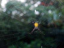黄色花园蜘蛛 免版税库存照片