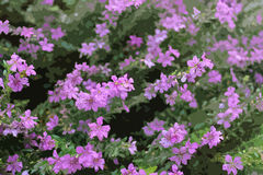 紫色花图表样式 库存图片