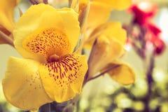 黄色花在公园 库存图片