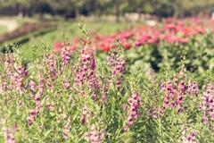 紫色花在公园 库存照片