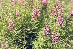 紫色花在公园 免版税库存图片