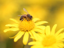 黄色花在公园 库存照片