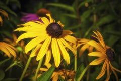 黄色花在夏天 免版税库存图片