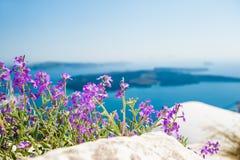 紫色花在庭院里有海视图 免版税库存照片