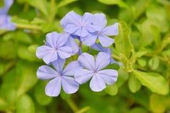 紫色花在庭院里 免版税库存照片