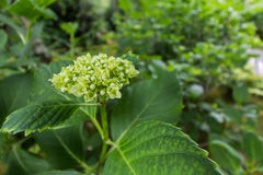 绿色花在庭院里 库存图片