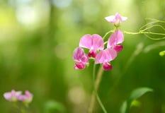 紫色花在森林里 免版税库存图片