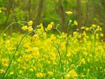 黄色花在森林里 免版税库存照片