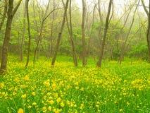 黄色花在森林里 库存照片