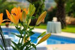 黄绿色花在游泳池边 库存图片