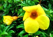 黄色花在焦点在庭院里 图库摄影