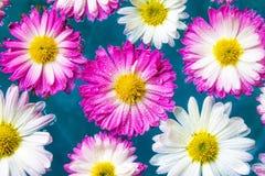 紫色花在蓝色天蓝色的水,自然背景,墙纸中 库存照片