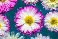 紫色花在蓝色天蓝色的水,自然背景,墙纸中 免版税库存照片