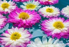 紫色花在蓝色天蓝色的水,自然背景,墙纸中 图库摄影