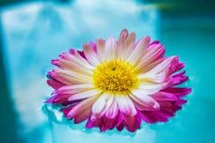 紫色花在蓝色天蓝色的水,自然背景,墙纸中 免版税库存图片