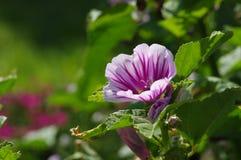 紫色花在阳光下 免版税库存图片