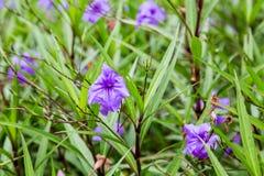 紫色花在绿色庭院里 免版税库存照片