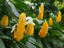 黄色花在Kew庭院,伦敦里 图库摄影