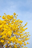 黄色花有蓝天背景在庭院里 免版税库存照片