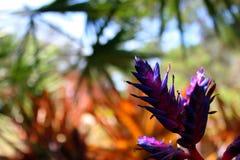 紫色花有被弄脏的自然背景 库存图片