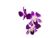 紫色花束的兰花 免版税库存图片