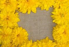 黄色花框架反对粗砺的布料背景的  免版税库存图片