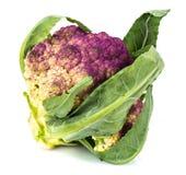 紫色花椰菜 免版税库存照片