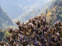 紫色花灌木和石灰石在山小山 库存图片