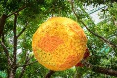 黄色花球  免版税库存图片
