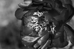 黑色花白色 库存图片