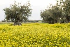 黄色花的域 自然,美好的背景 库存照片