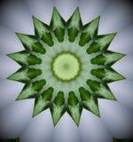 绿色花的样式 图库摄影