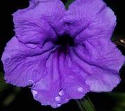 17紫色花的DEC 2016关闭 免版税库存图片