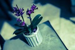 紫色花盆 免版税图库摄影
