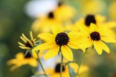 黄色花背景绿色叶子 免版税库存图片