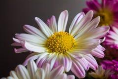紫色花花束,自然背景 免版税库存照片