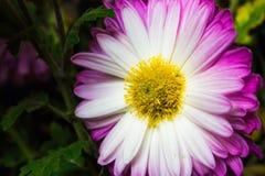 紫色花花束,自然背景 图库摄影