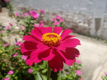 紫色花街道艺术 库存照片