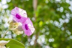 紫色花,大象爬行物,银色牵牛花 库存图片