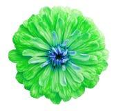 绿色花,白色隔绝了与裁减路线的背景 特写镜头没有阴影; 库存照片