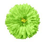 绿色花,白色隔绝了与裁减路线的背景 特写镜头 免版税库存图片