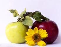 黄色花,绿色和红色苹果 免版税图库摄影