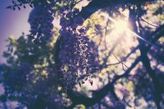 紫色花从下面 库存图片