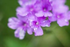 紫色花细节 库存照片