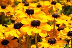 黄色花 图库摄影