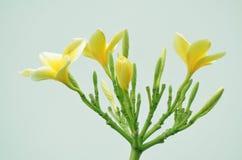 黄色花 免版税库存图片