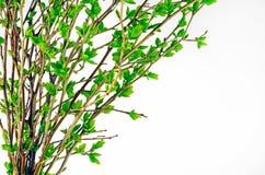 绿色芽 库存照片